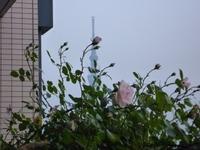 東京スカイツリー2011年5月