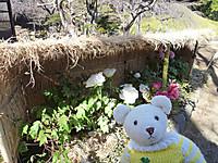 小石川後楽園2013年3月