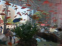 銀座ソニービルで美ら海に出会った