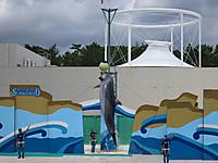 鴨川シーワールド2014年8月 イルカのジャンプ