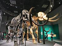 太古の哺乳類展