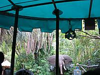 朝のジャングル・クルーズ