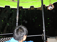 TDLハローウィン2014年(5) 夜も楽しいハローウィン