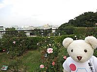 横浜山の手2014年秋