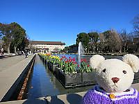 上野公園に春を見つけたよ